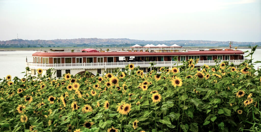 Heritage Line Anawrahta amidst a field of sunflowers