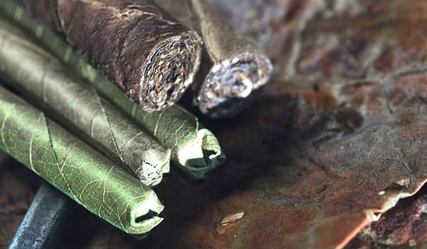 Cheroot cigars, a Burmese sepciality